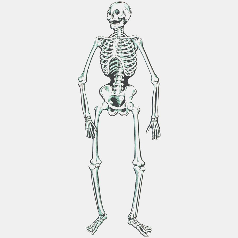This Is How Skeleton Decoration Will Look Like In 10 Years