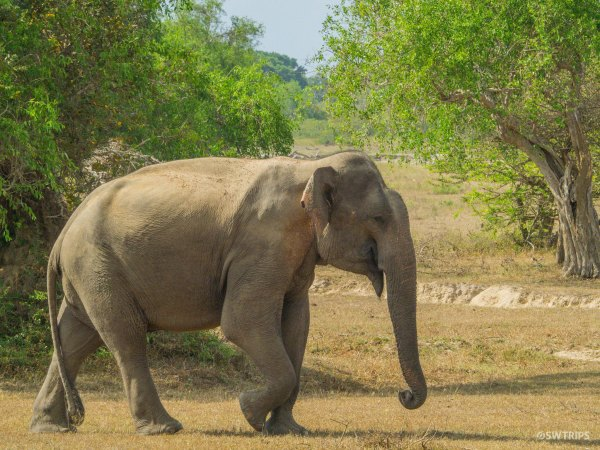 Elephant Bull - Yala, Sri Lanka.jpg