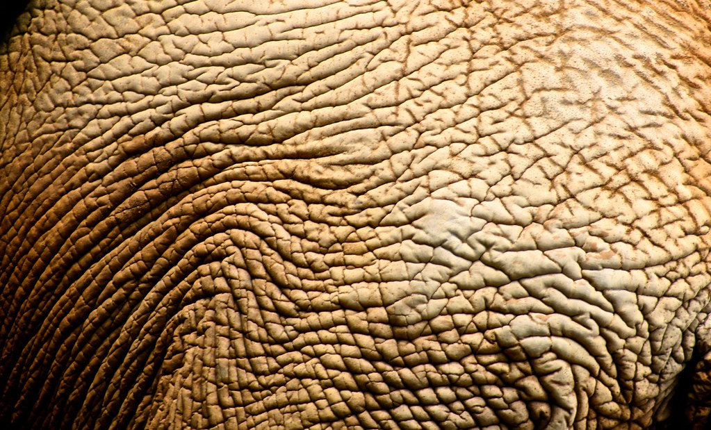 Skin Texture Elephant Zoo SP Anderson Mancini Flickr
