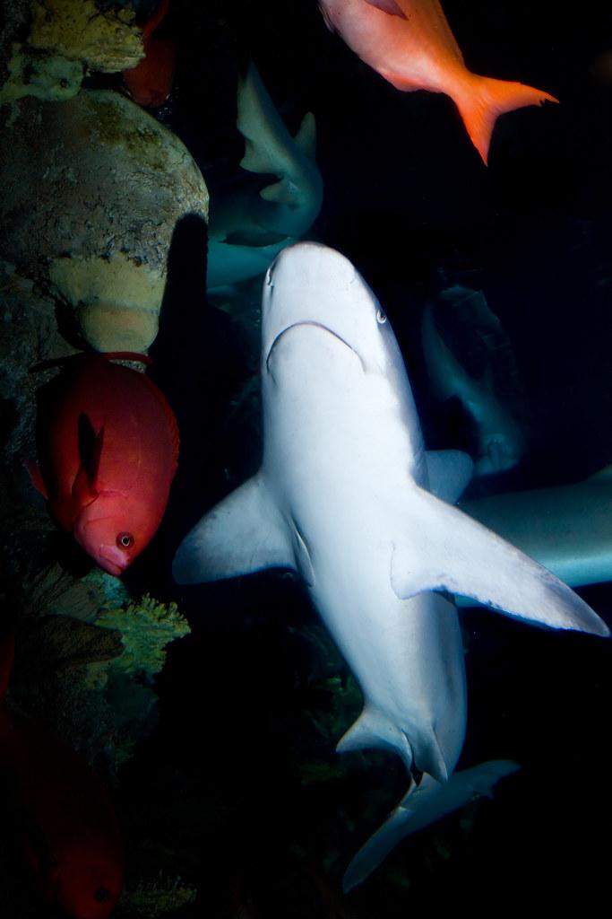 Mandalay Bay Shark Reef 2628  I love the extra tails in