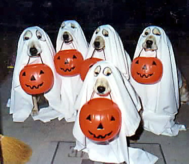 dogs in ghost costumes