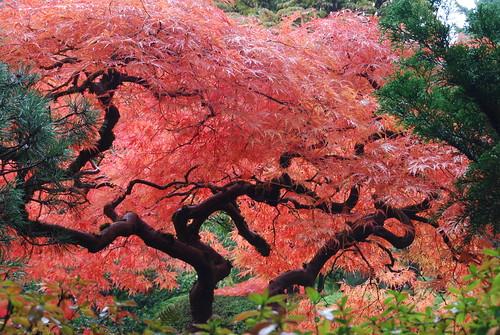 Image Result For Portland Japanese Garden