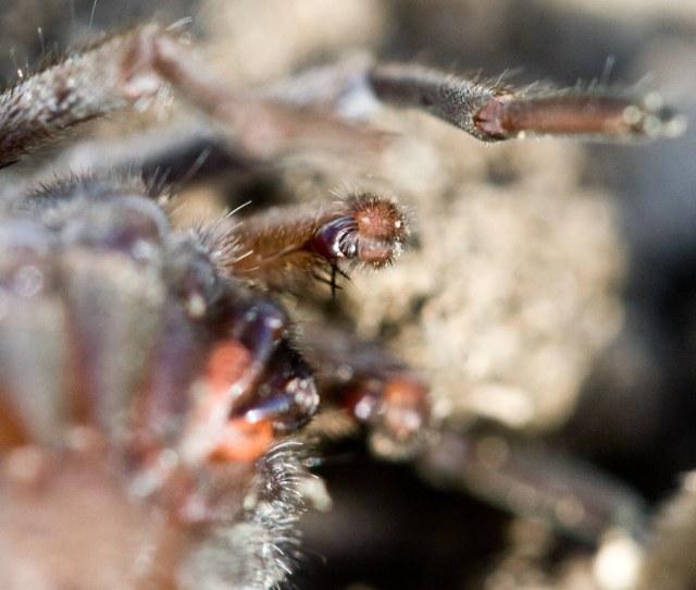 Spider Porn By Ken Ichi
