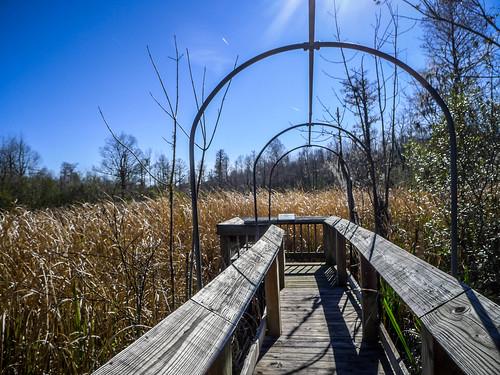 Old Santee Canal Park-120