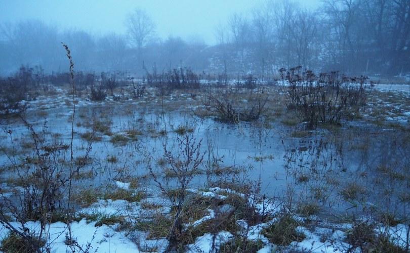 wenig wilder Sumpf