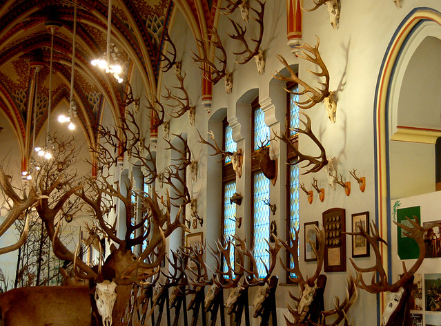 Amazing Antler Collection  At the Agricultural Museum