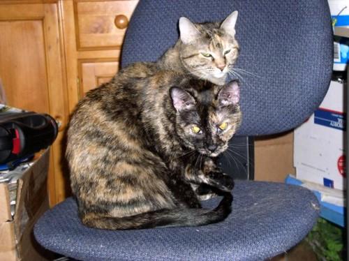 The Amazing TwoHeaded Cat  Morgan and Chloe Morgan