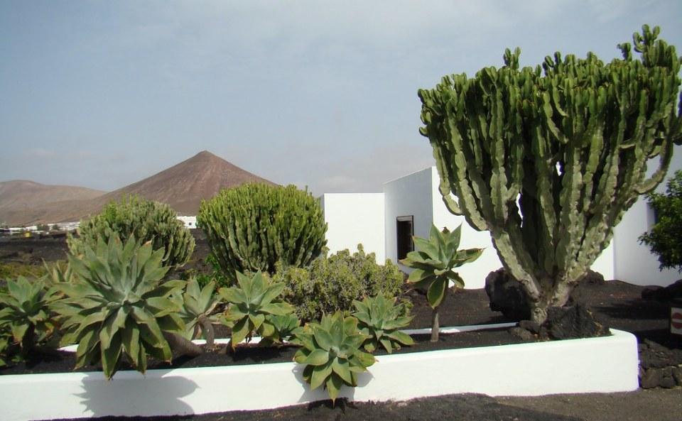 Jardin cactus y volcan Fundacion Cesar Manrique Lanzarote 26