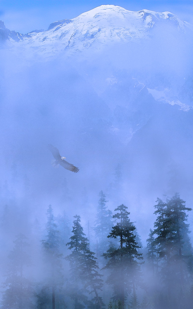 Fall Wallpaper For Large Monitors Quot This Is Love To Fly Toward A Secret Sky To Cause A Hund