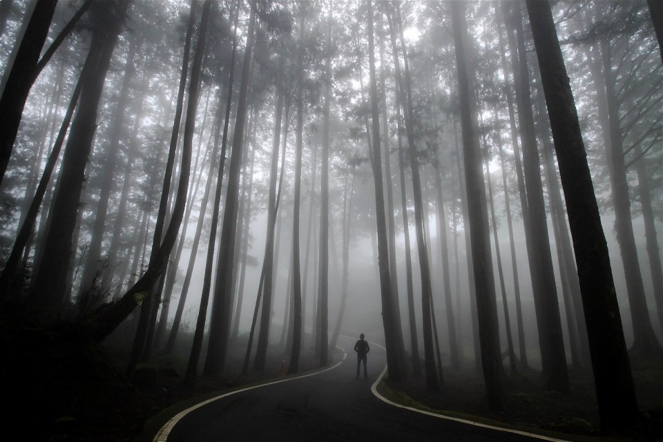 Foggy Forest in Alishan
