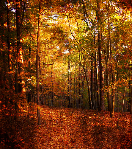 Falling Leaves Wallpaper Free Download Autumn S Enchanted Forest An Enchanted Life Has Many