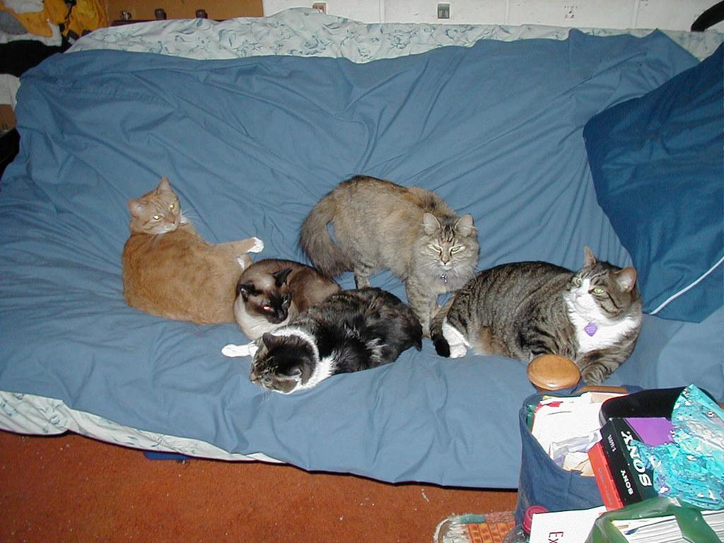 kitty couch tengrrl flickr
