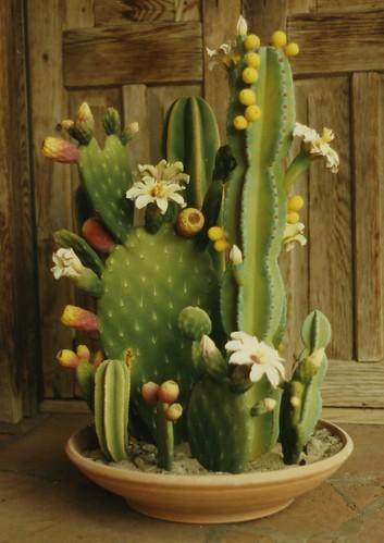Zweifel Ceramic Cactus Made From Slip Castings Taken