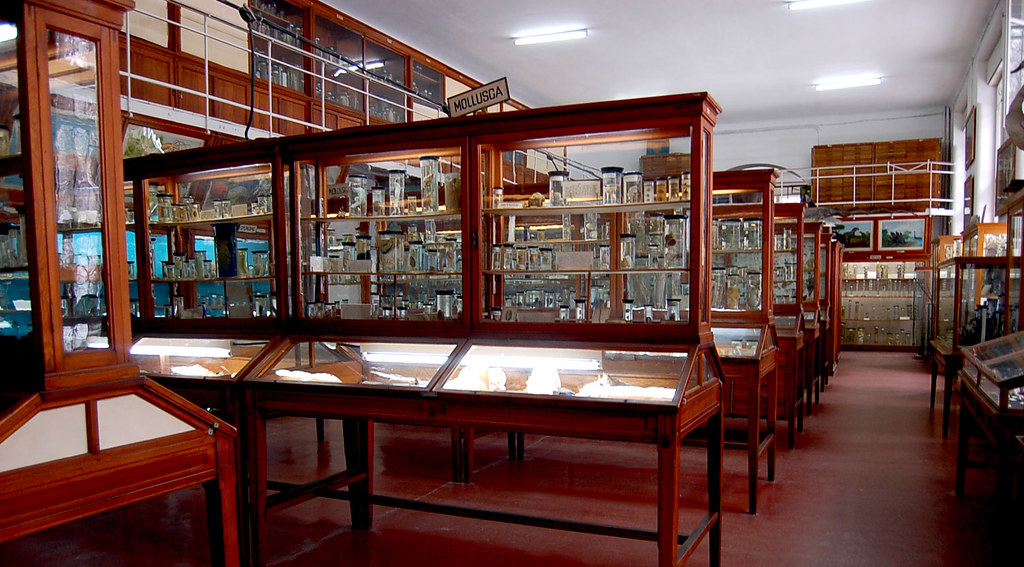 Doublesided glass display cases  At the wonderful