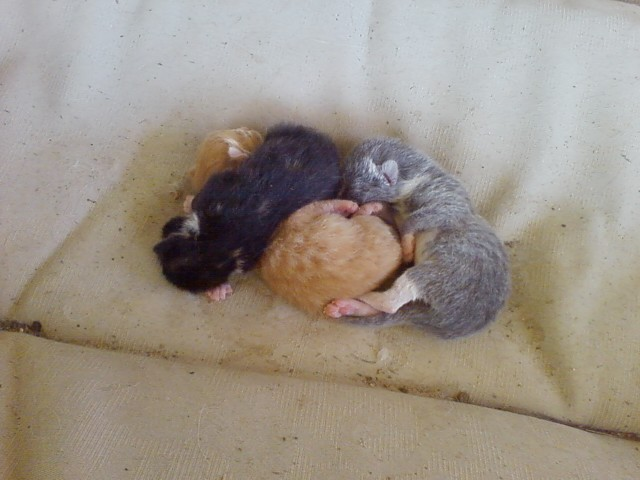3 2 Day Old Kittens Kittens 2 Day Olds On The Patio