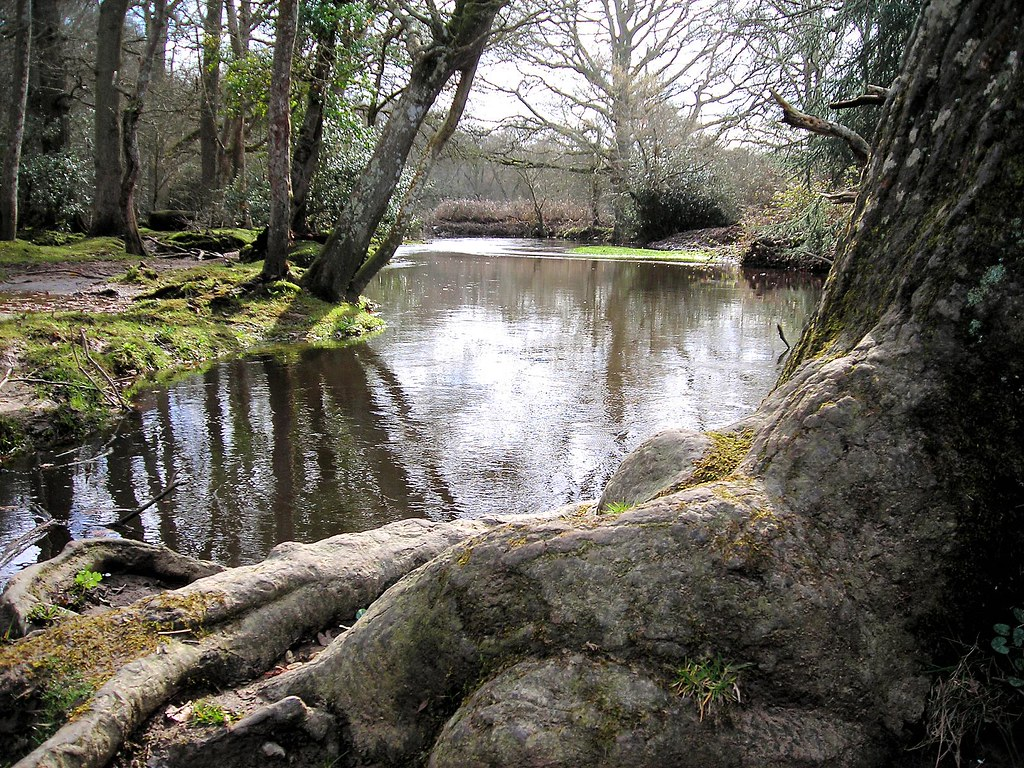 New Forest River At Mill Lane Brockenhurst 2 Just