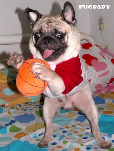 SMILING PUG NBA PUG O HAPPY NEW YEAR 2008
