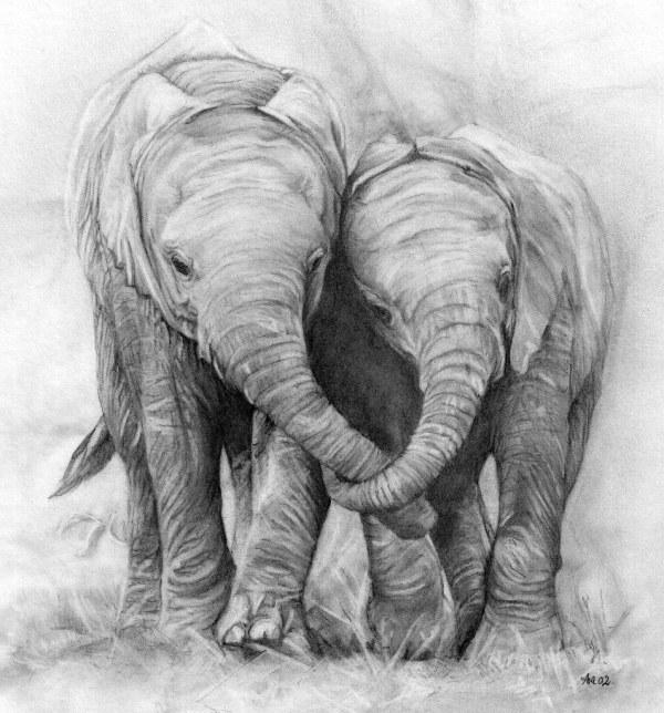 Elephants. Pencil Drawing Poaching Of Elephants