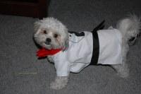 Stupid Dog Costume   Blanche had to buy a stupid costume ...