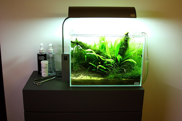 ADA Cube Garden Mini on our cabinet  ADA Style Cabinet by