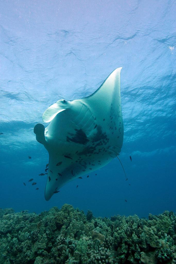 Image Result For Diving World