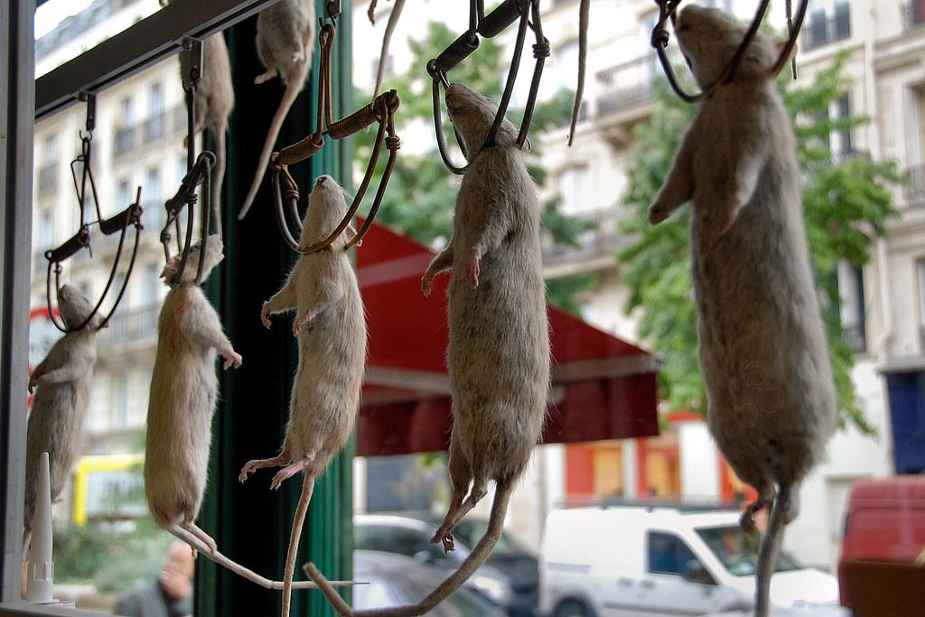 Ratatouille Mouse Trap Shop Paris  Nel film