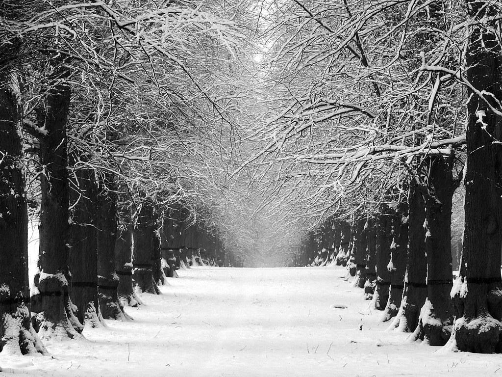 Falling Snow Desktop Wallpaper Lime Tree Avenue In Winter Black And White Version Flickr