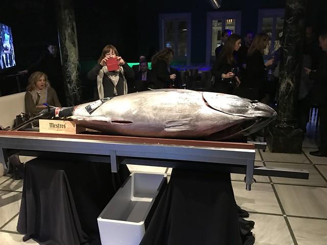 Ronqueo de un atún rojo. koketo.