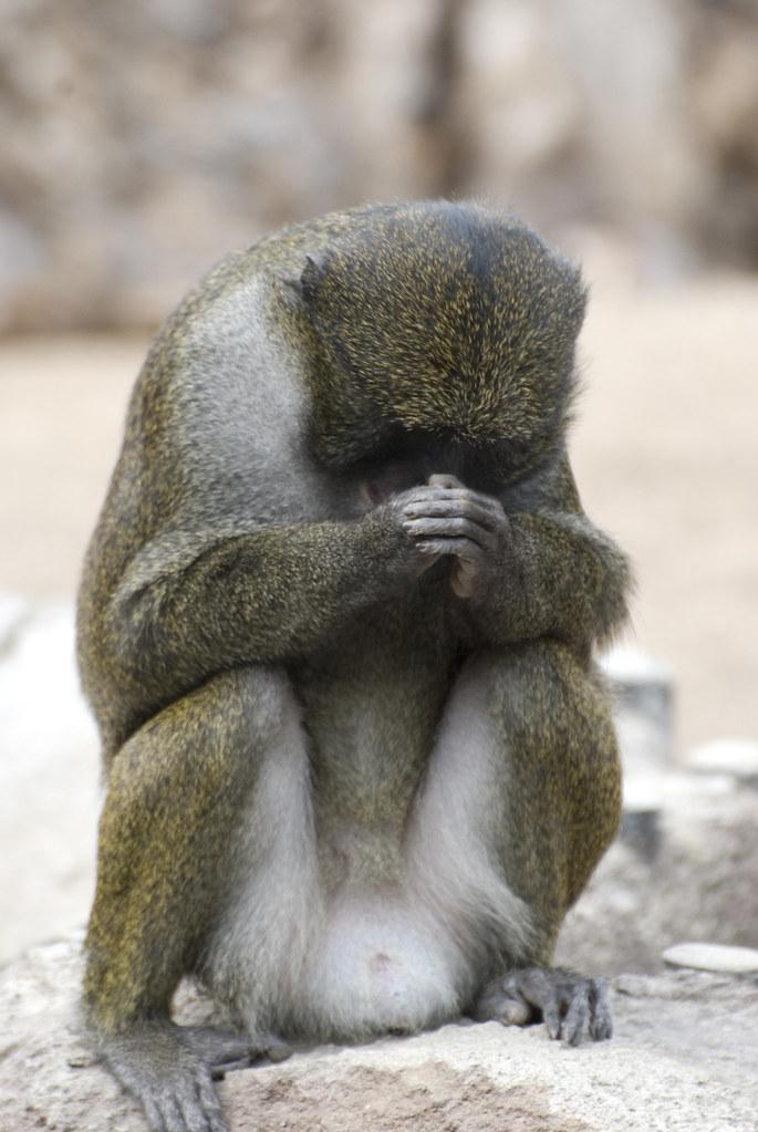 Cute World Map Wallpaper Praying Monkey Andrew Albertson Flickr