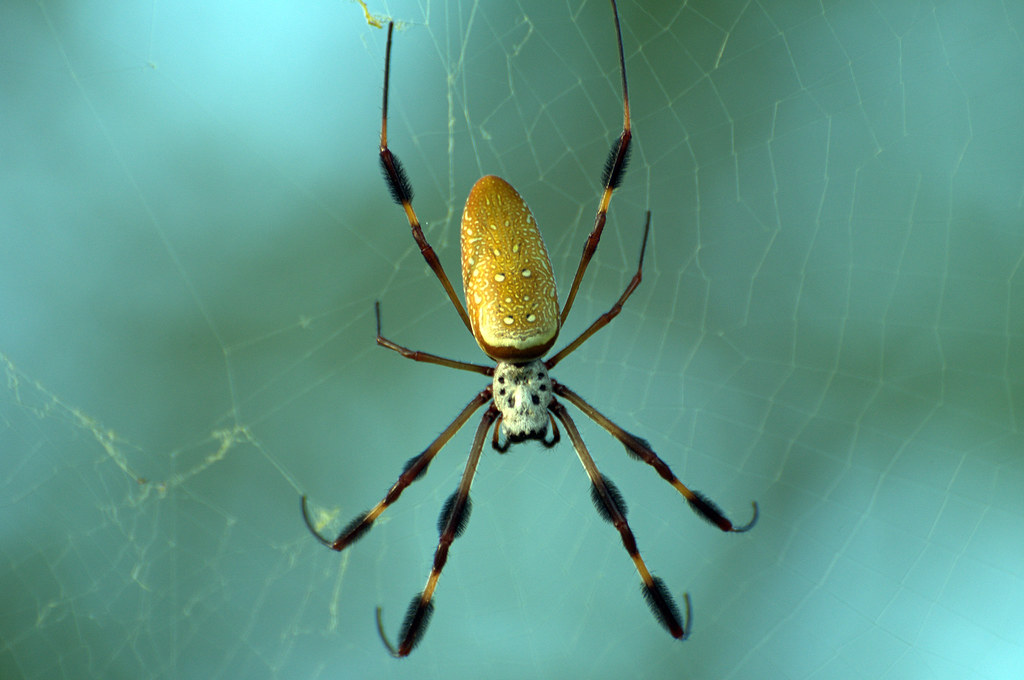 Writing Spiders Pictures