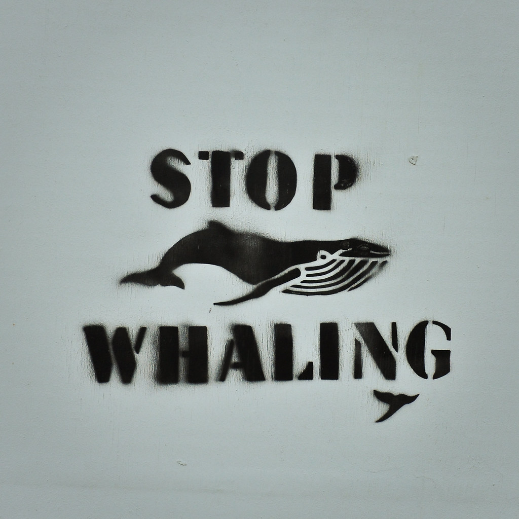 As Captain Paul Watson says  STOP WHALING There are