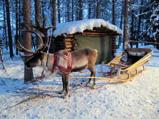 Image result for Reindeer sleigh ride Kuusamo Lapland flickr