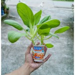 3 mobile DIY hydroponics Pot by yoghurt cup   b inxee   Flickr