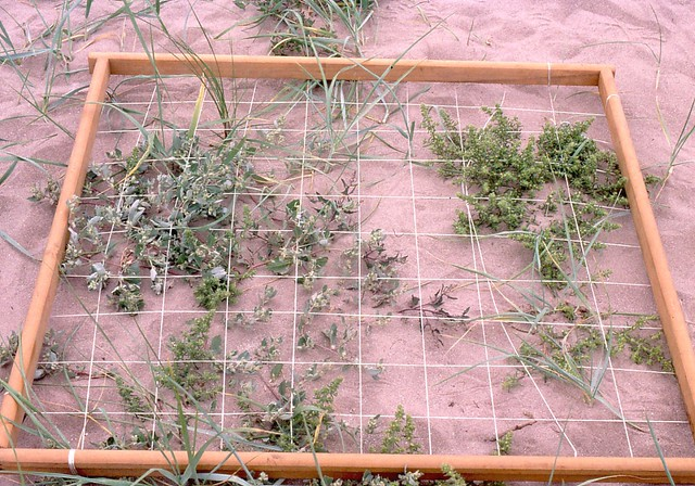 Foreshore Vegetation sampling using a quadrat   SAGT   Flickr