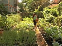 NYC's Cool New Backyard Farms: Growing More Than Just Prod