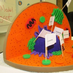 Plant Cell Diagram Project Ideas Speaker Cable Wiring Florida Science Flickr
