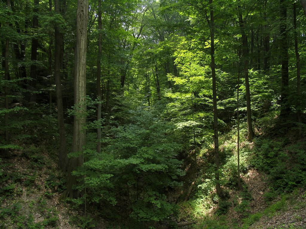 Free 3d Fall Wallpaper Green Deep Woods Jpg Summer Makes Me Miss Where I Grew
