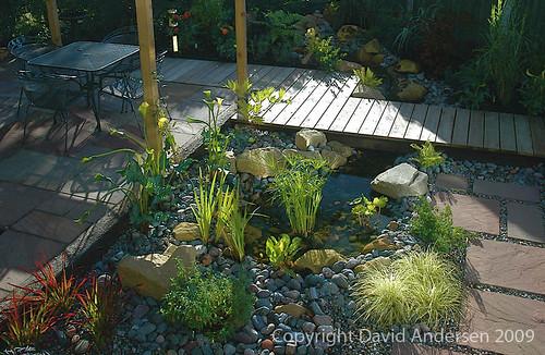 Small Contemporary Water Garden  A timber decked bridge
