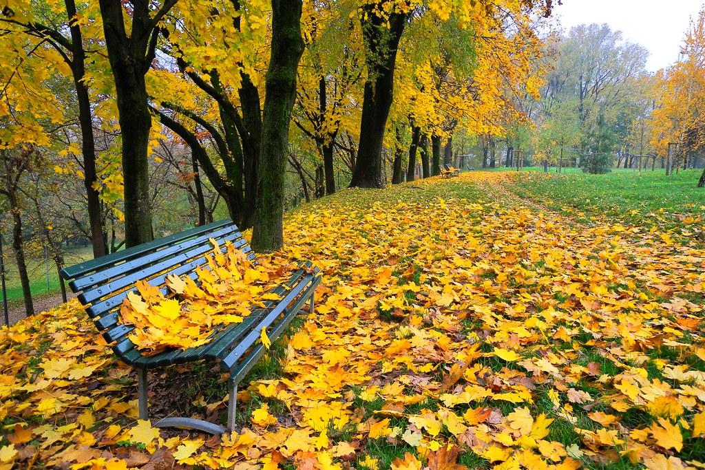 Milano lautunno al Parco Monte Stella  Novembre 2009  Flickr