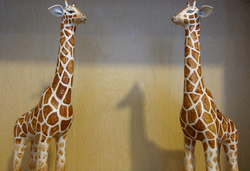 Papier mache giraffes  Designed and hand made by Jim
