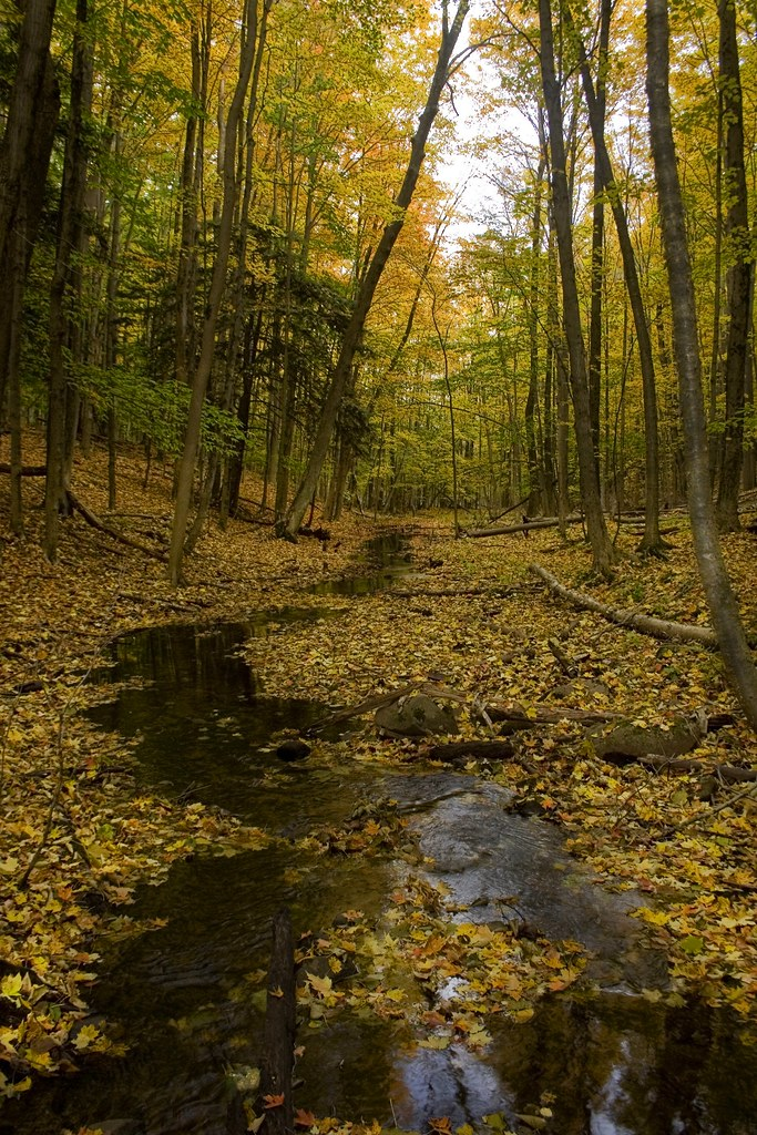 Great Lakes Wood Floors
