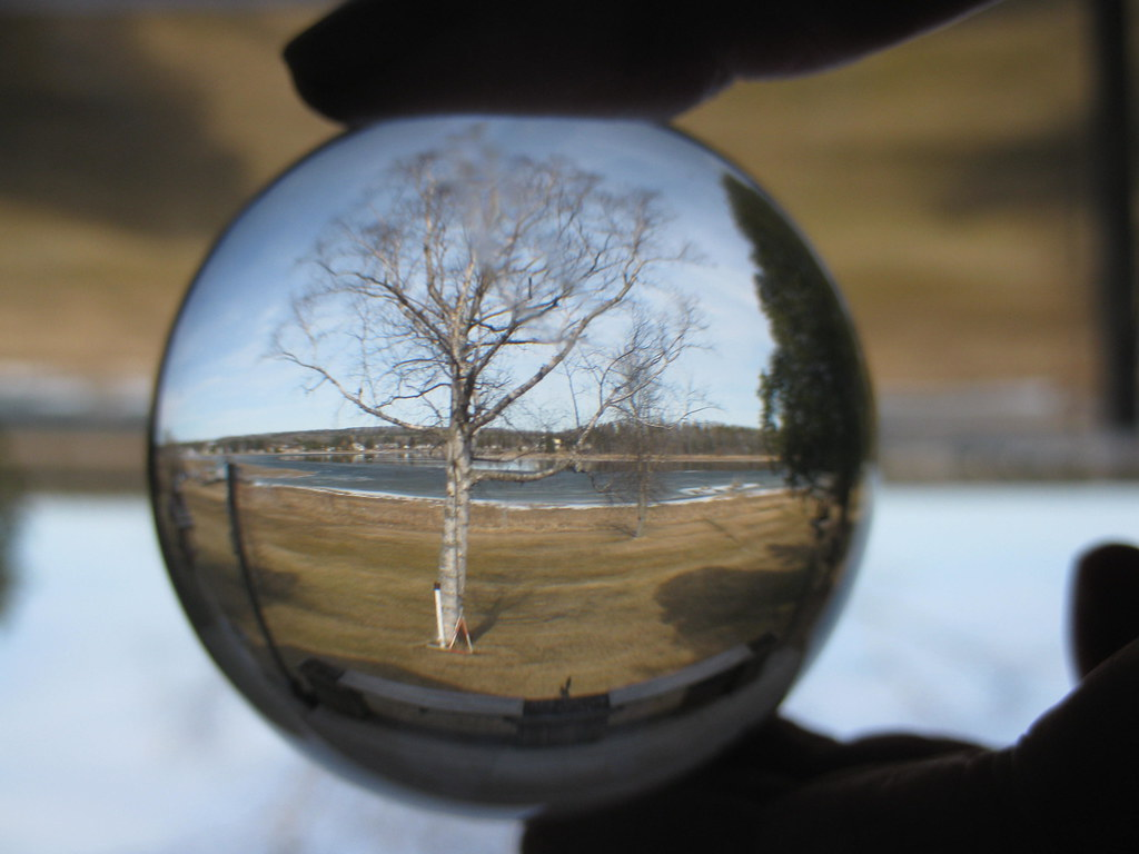 Looking Through My Crystal Ball Trees And Plants Are
