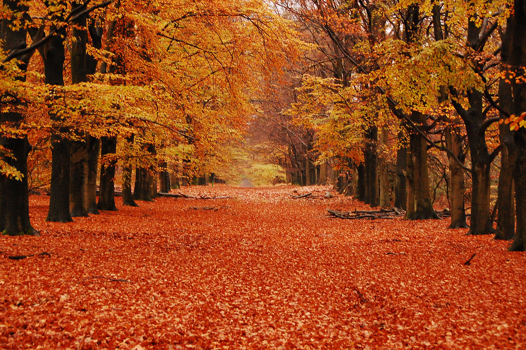 Fall Wallpaper Photos Microsoft Orgasmic Orange Overload From The H V National Park I