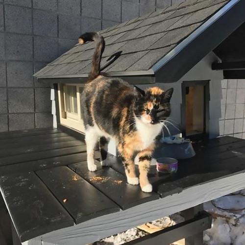 cops-build-stray-swat-cat-condo-7