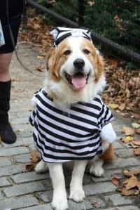 Jail Dog | McGolrick Park Dog Halloween Costume Contest ...