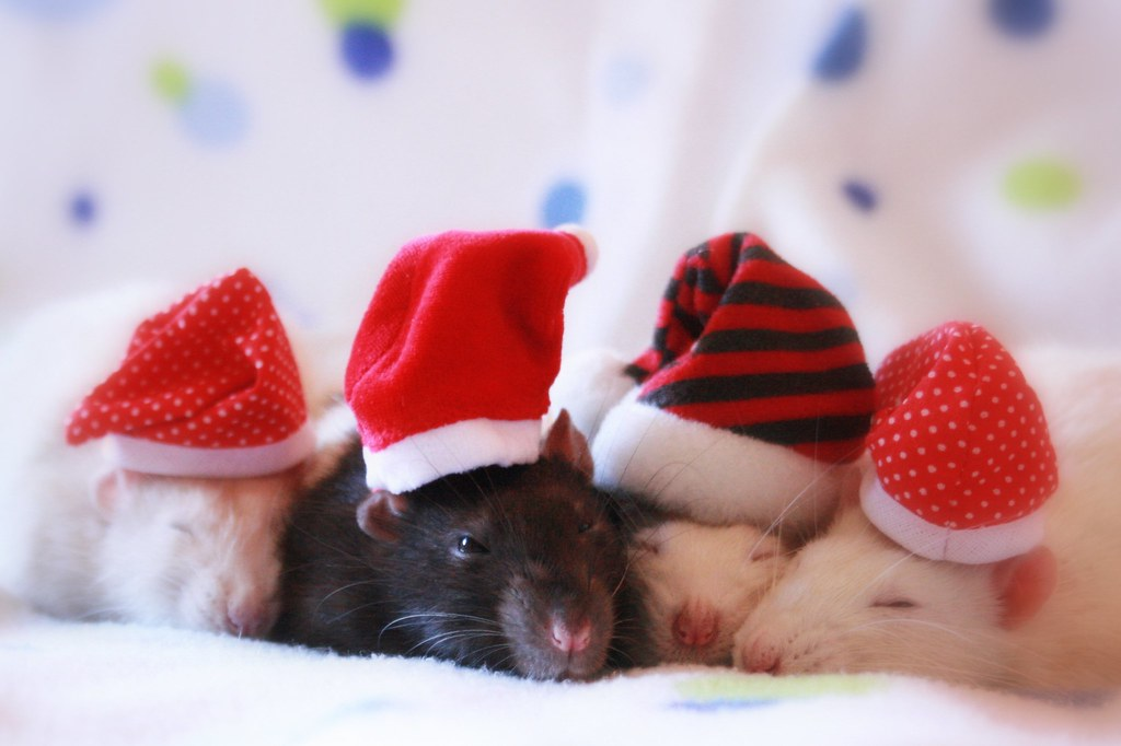 Cute Lovely Wallpaper For Mobile Dreaming And Waiting For Christmas Last Week I Took A