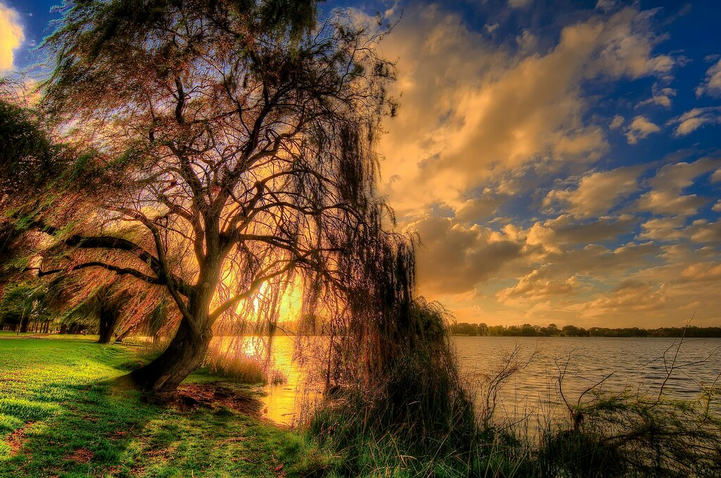 Free Fall Bc Nature Wallpaper Weeping Willow Willow On Lake Monger Perth Wa Mike