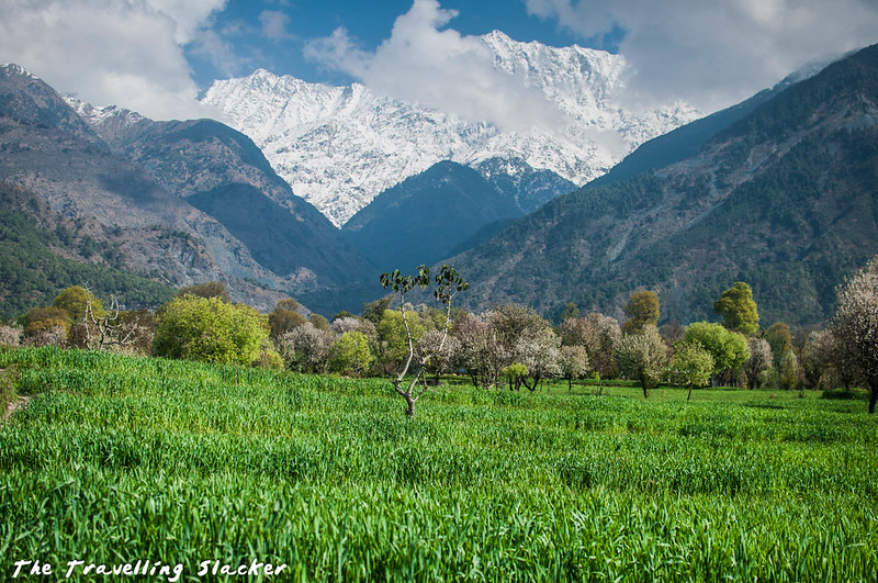 Sidhpur-Zen Valley (12)
