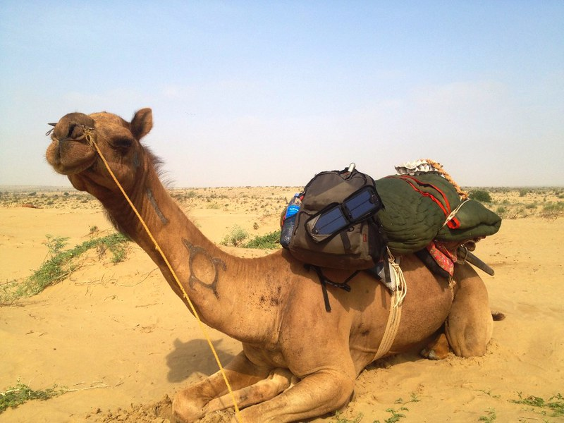 camel loaded with stuff in thar desert