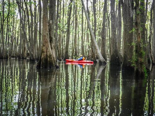 Sparkleberry Swamp-45